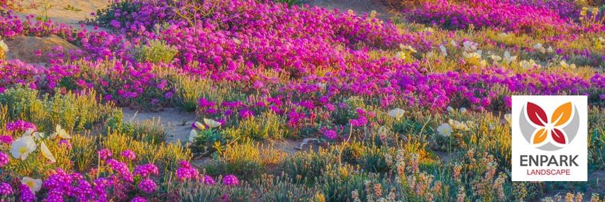 15 Flowers Common to Desert Landscape