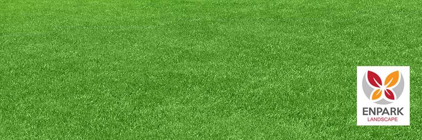 Beautiful Las Vegas Grass and Lawn