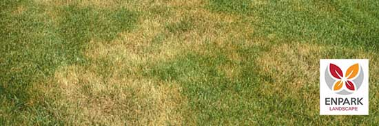 Brown Patch Lawn Disease for Grass