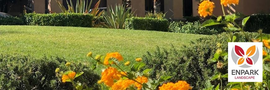 How Weekly Lawn Care Service is Worth the Price