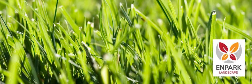 Las Vegas grass Zoysia Bermuda