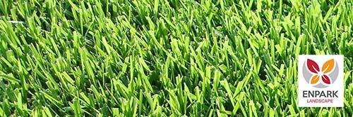 Zoysia grass in las vegas, nv landscaping