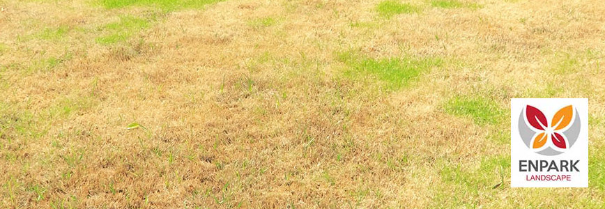 How to Revive Dry Dead Grass in Your Landscaping