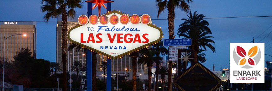 Las Vegas Landscaping Problems You Can Easily Avoid