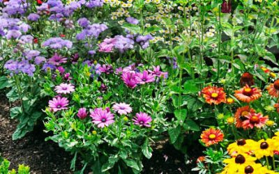 How to Maintain Your Flower Beds Like a Professional