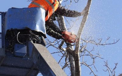 Why Tree Removal in Las Vegas is Best Left to Professionals