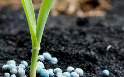 The Basics of Applying Fertilizer in Your Vegetable Garden