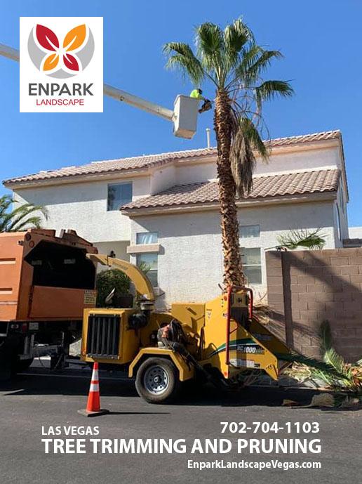 Trimming Trees in Las Vegas, NV
