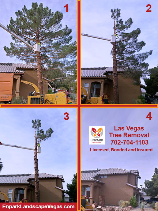 The 4 stages of cutting down a 40 footer in Las Vegas, Nevada